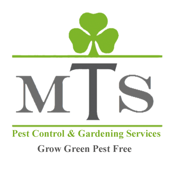 Home Mts Gardening Pest Control Fumigation Services In Karachi Online Shopping In Pakistan