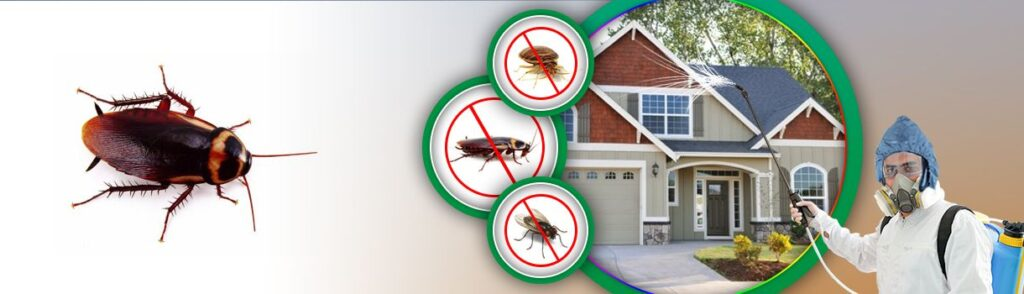 cockroaches-pointe-pest-control-1