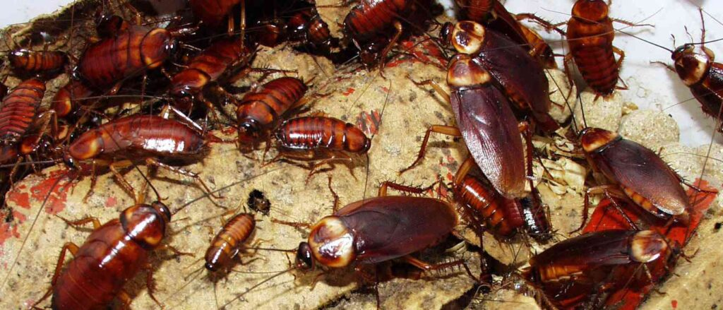 cockroaches-pointe-pest-control
